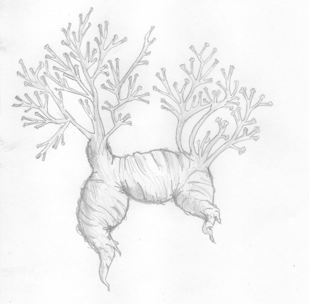 logo-colectivo-rizoma